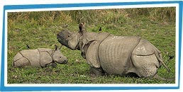 Kaziranga Wilderness Tour