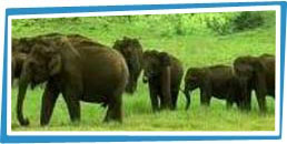 Panna National Park Tour